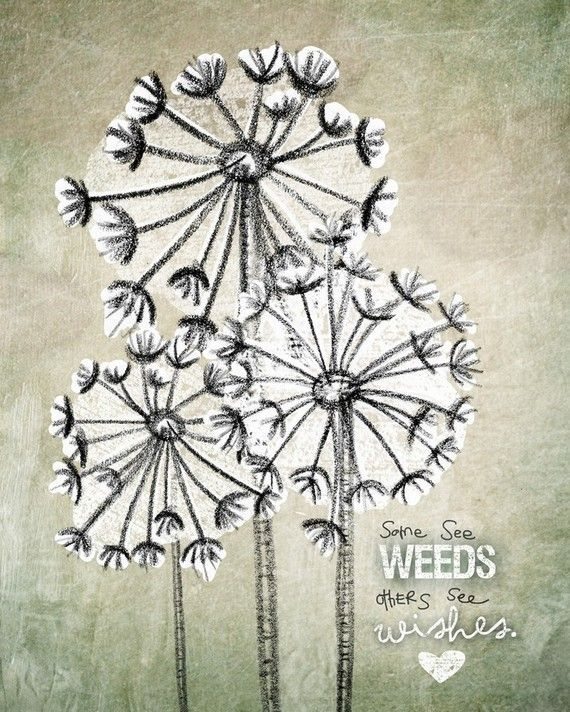 dandelion-quote